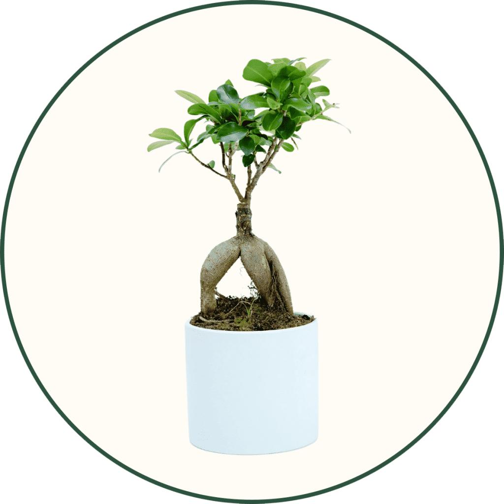Plantes Japonaises