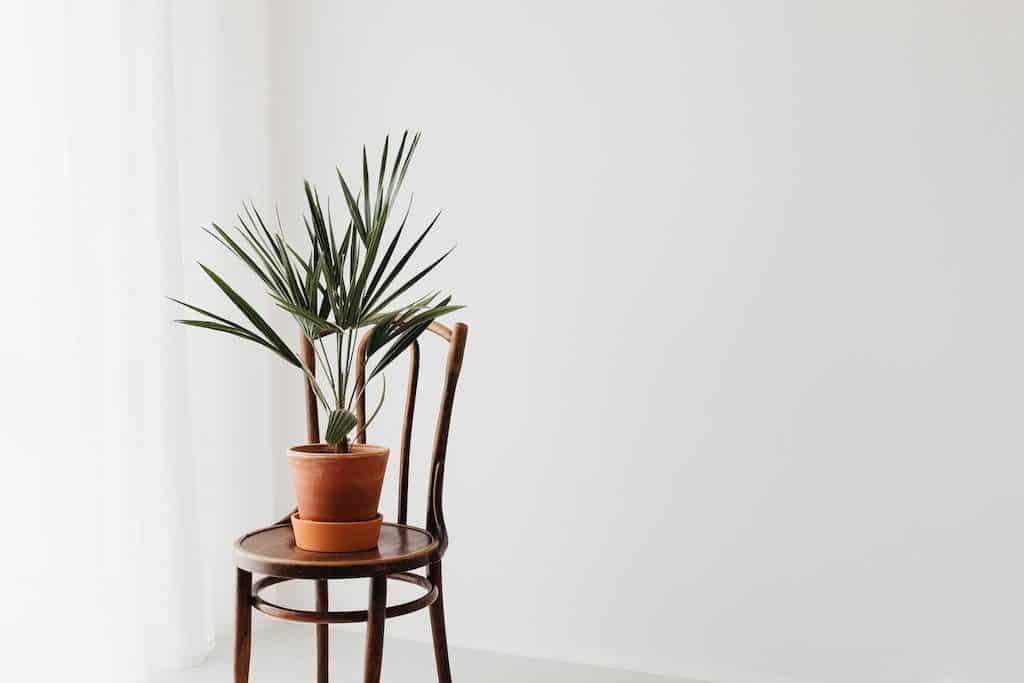 Accessoires plantes vertes