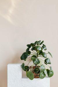 Porte plante d'intérieur