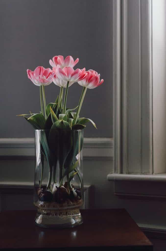 Fleurs hydroculture