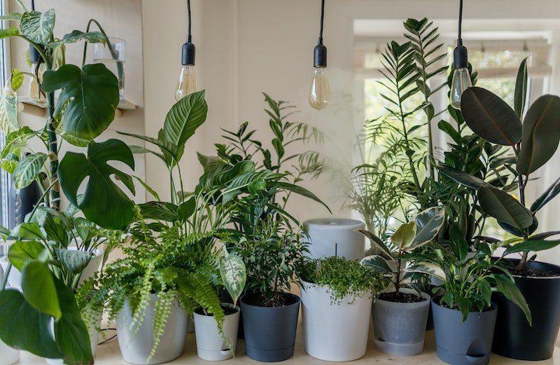 Lampes Plante Verte