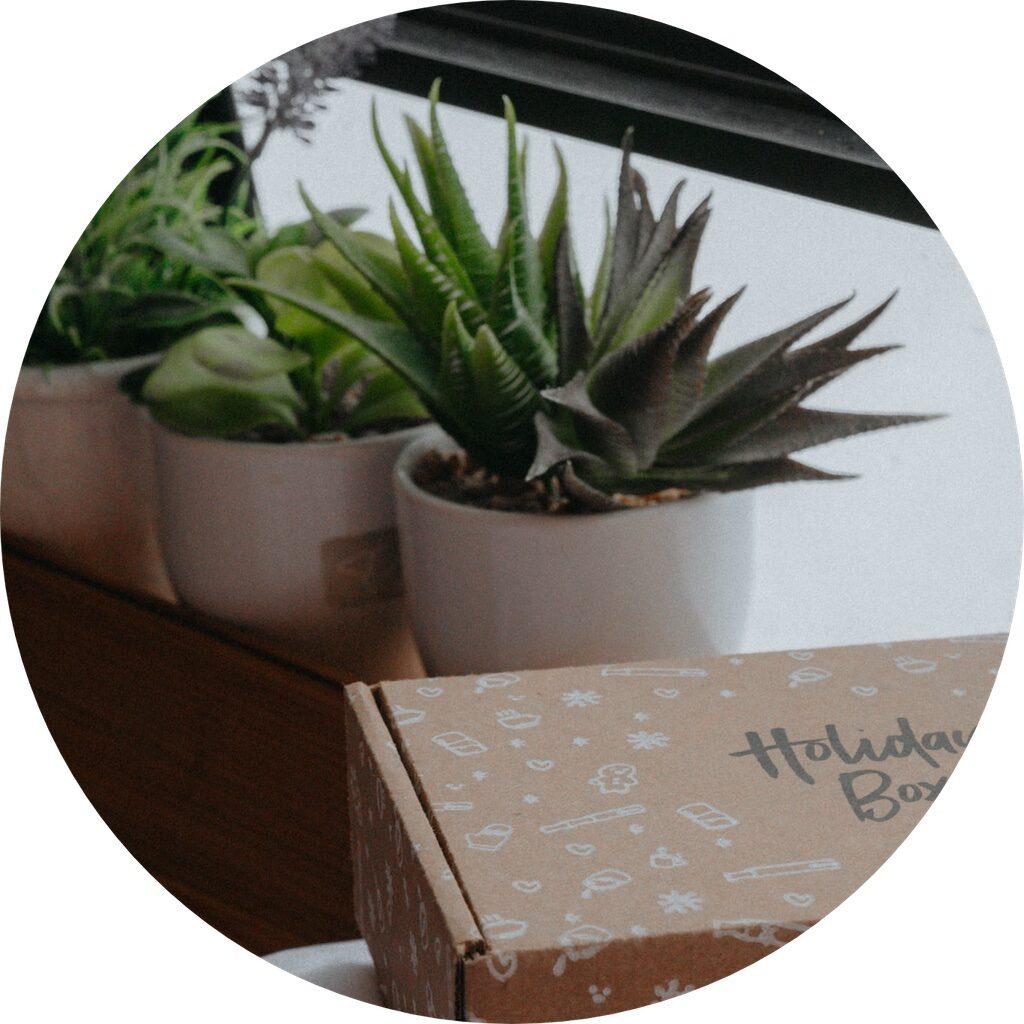 Box plantes d'intérieur
