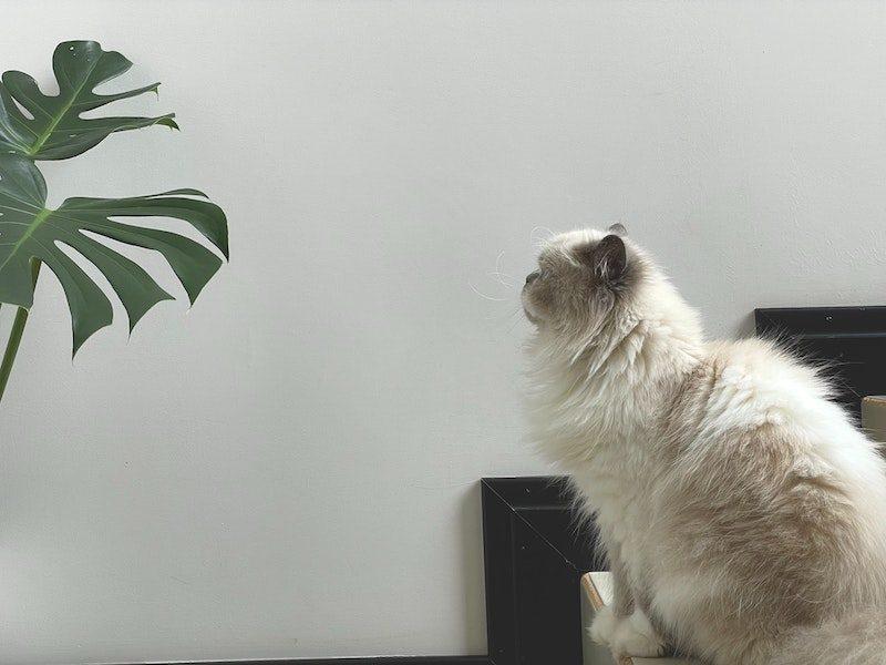 Prévention chat