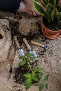 Substrat Plante