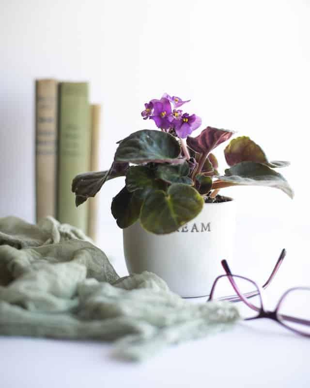 Violette africaine