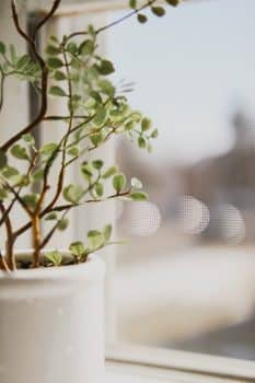 plante-fake