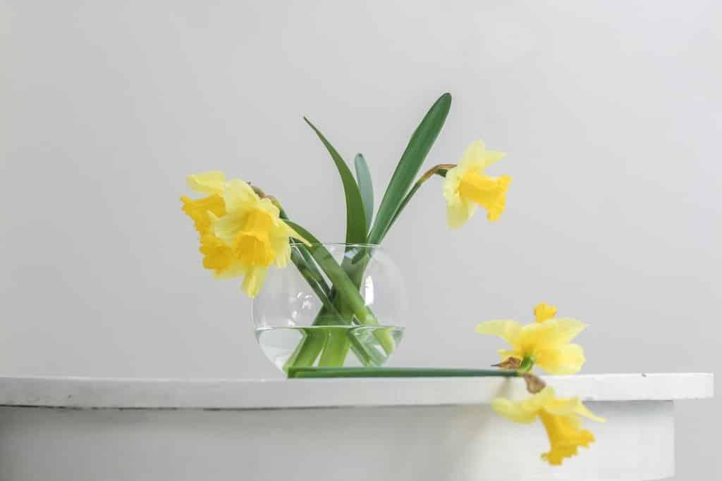 plante-fleurie