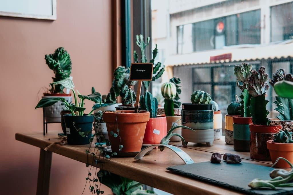 plantes les plus tendances