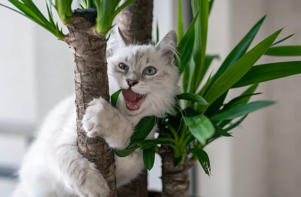 yucca-animaux
