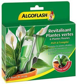 algoflash-plantes-vertes