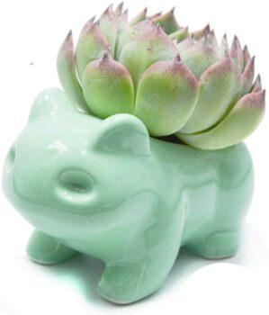 cache-pot-grenouille