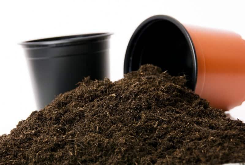 substrat plante intérieur