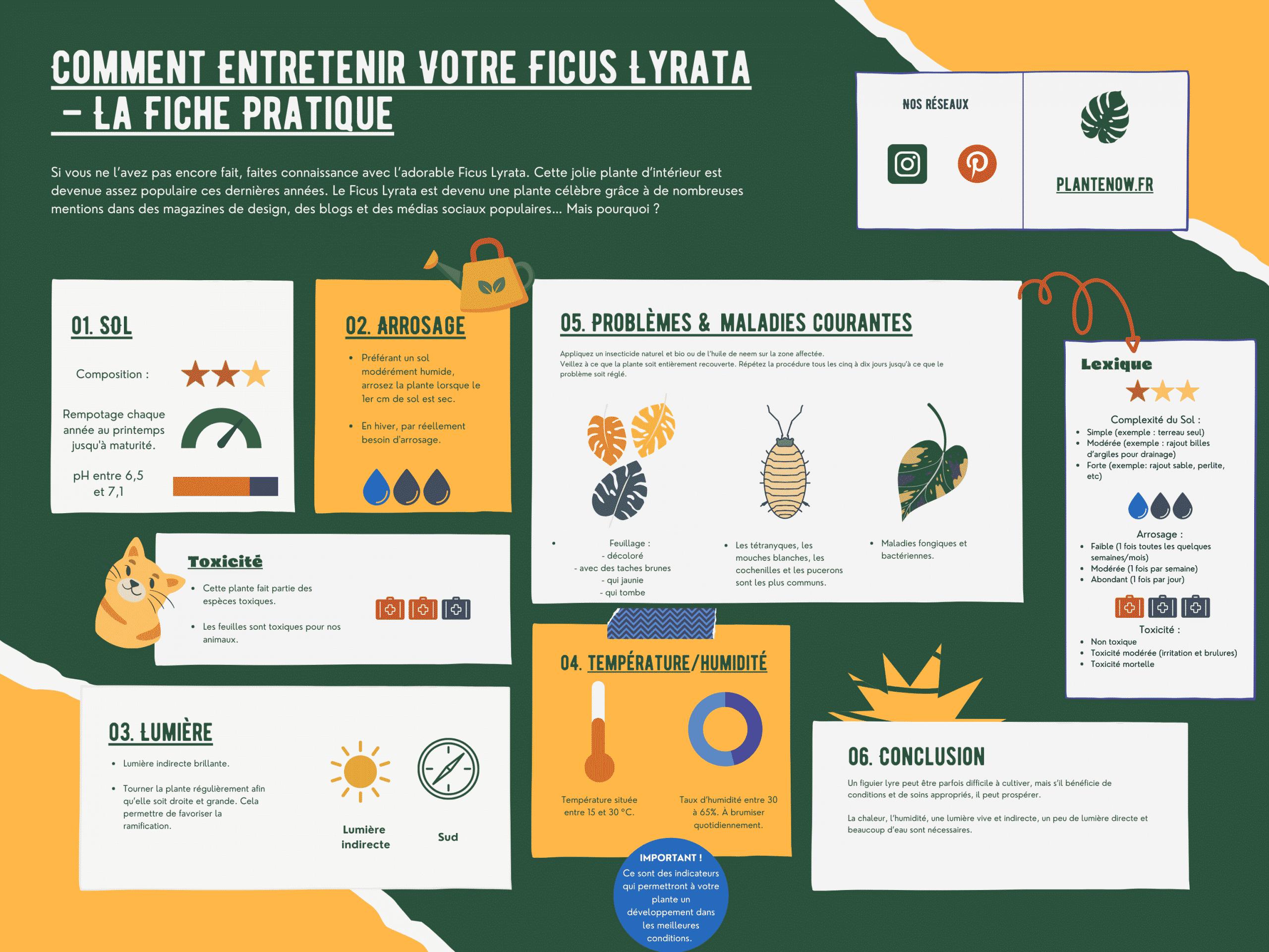 Comment Entretenir Votre Ficus Lyrata – La Fiche Pratique