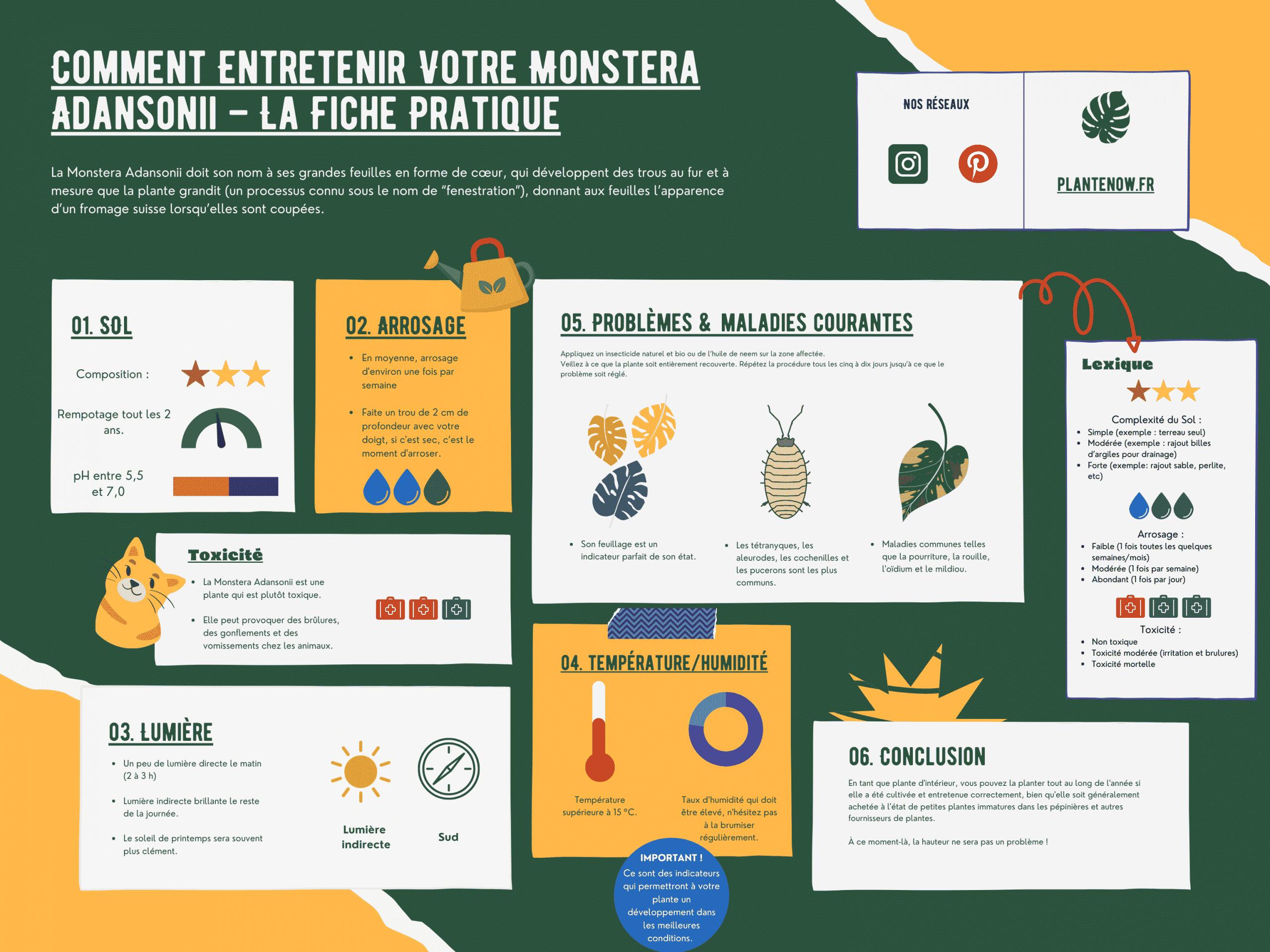 Comment Entretenir Votre Monstera Adansonii – La Fiche Pratique