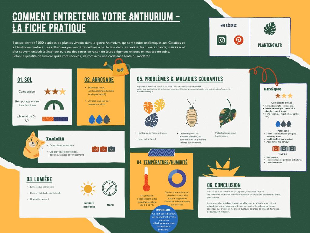 Comment entretenir votre Anthurium - Le guide Complet