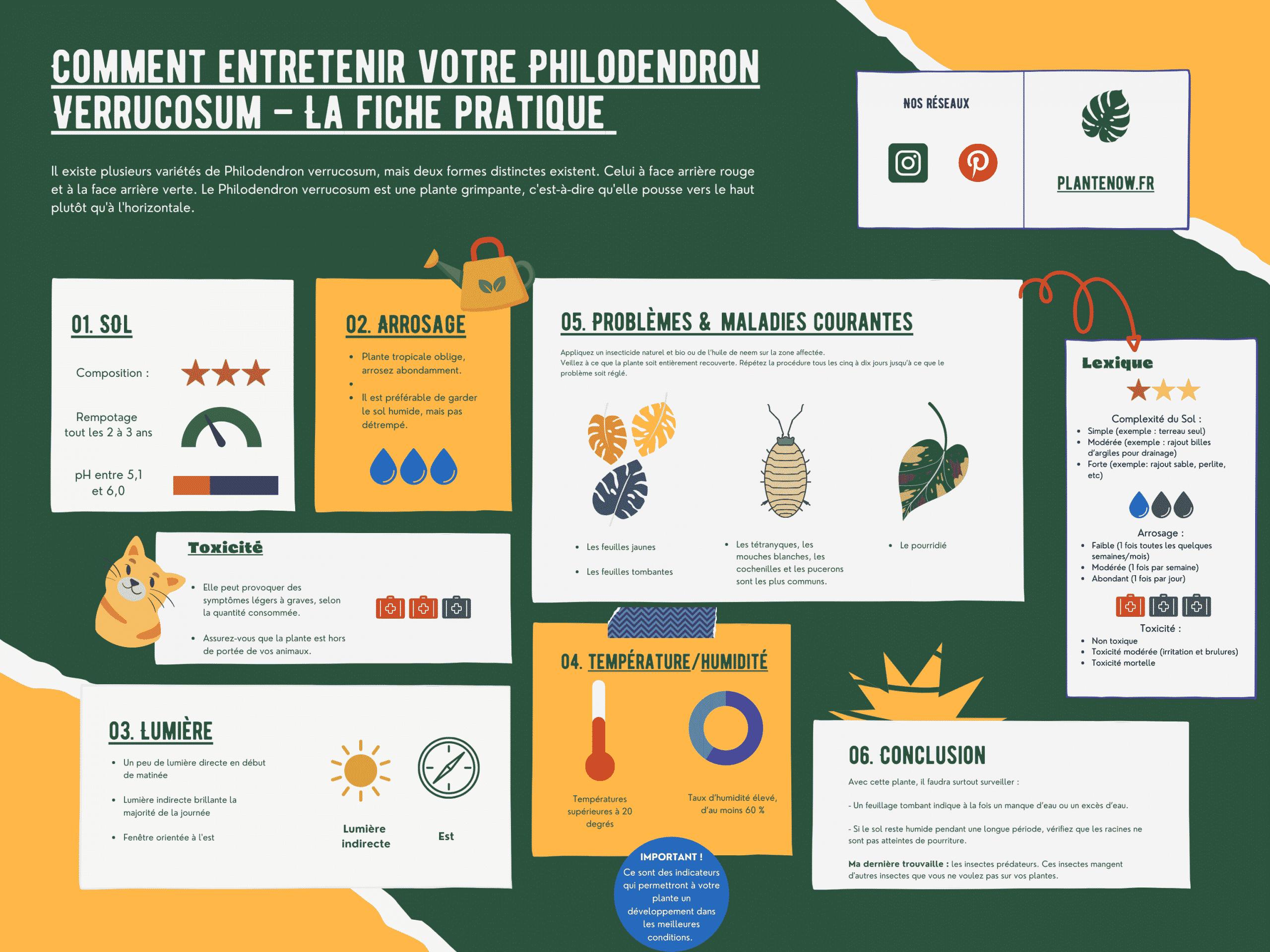 Comment entretenir votre Philodendron Verrucosum – La fiche pratique