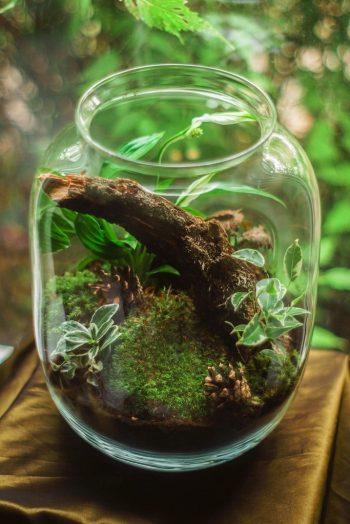 Bocal terrarium