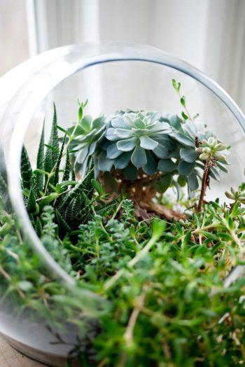 Plantes vertes pour terrarium